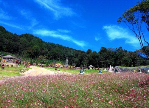 Pocheon Herb Island